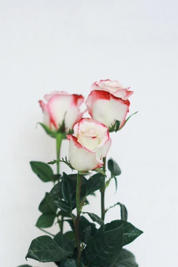 Für das Nagelöl Rose wurde hier drei Rosen dargestellt.